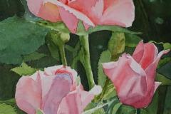 Rose Bush, Ralph F. Wilson