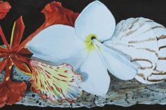 Island Treasures, Phyllis Orzalli