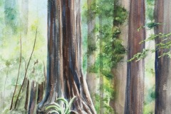Redwood Forest, Rebecca Jaggers