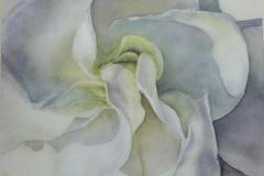 Gardenia, Nini Redway