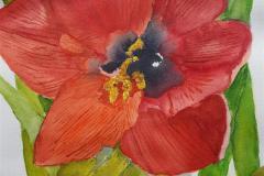 Amaryllis Up Close, Virginia Dunstan