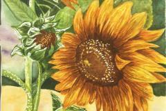 Aubin's Sunflower, Judith Hawkins