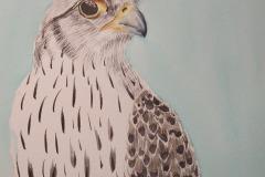 Big Eye Falcon, Charles Green