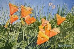California Poppies, Ralph Wilson