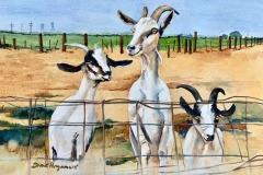 Three Pals, Diane Pargament