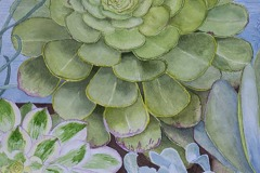 Succulents, Phyllis Orzalli