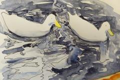 Ducks at Chautla, Alex Aruj