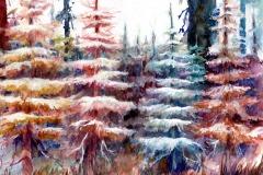 Evergreens, Alyslynn Lemke