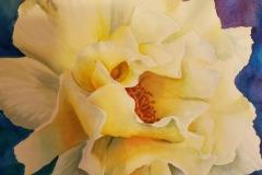 My Yellow Rose, Kathleen Thomas, 2nd Place