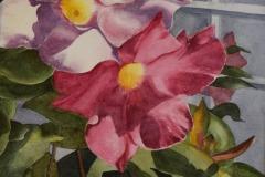 Mandevilla Blossoms, Richard Cerruti