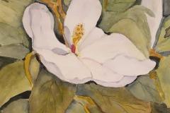 Magnolia Blossom, Virginia Dunstan