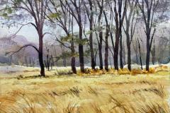 Cooks Meadow, Yosemite, Michael Friedland