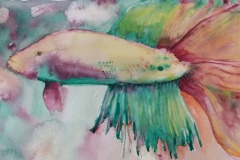 Beta Fish, Alex Aruj